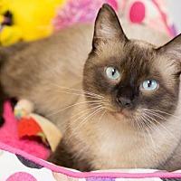 Adopt A Pet :: LeRoy Brown - St. Paul, MN