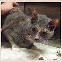 Adopt A Pet :: PRISSY PANTS-avail 8/18 - Marietta, GA