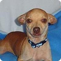 Adopt A Pet :: Triscuit - CUTE BOY - Seattle, WA