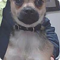 Adopt A Pet :: Pixie - Lynnwood, WA
