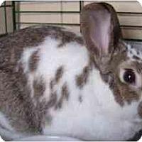 Adopt A Pet :: Peanut - Maple Shade, NJ