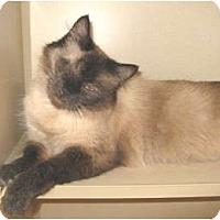 Adopt A Pet :: Carmella - Mesa, AZ