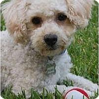 Adopt A Pet :: Delaney - La Costa, CA