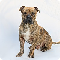 Adopt A Pet :: Lightning - Los Angeles, CA