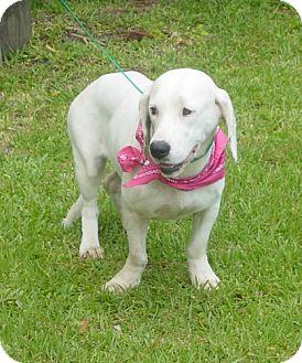 Basset Hound Mix Dog for adoption in Port St. Joe, Florida - Hope