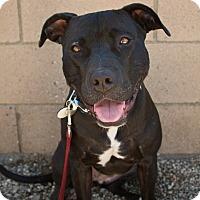 Adopt A Pet :: Alyce - Los Angeles, CA