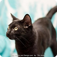 Adopt A Pet :: Kringle - Fountain Hills, AZ