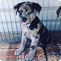 Adopt A Pet :: LANEY - Pompton Lakes, NJ