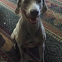 Adopt A Pet :: Austin - Grand Haven, MI