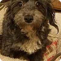 Adopt A Pet :: Queenie - Detroit, MI