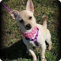 Adopt A Pet :: Venus - Lodi, CA