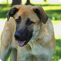Adopt A Pet :: *Keena - PENDING - Westport, CT