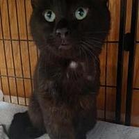 Adopt A Pet :: Taco - Ashtabula, OH