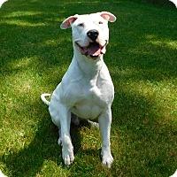 Adopt A Pet :: Zeus - Lafayette, NJ