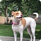 Adopt A Pet :: Meekah