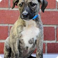 Adopt A Pet :: Evan - Waldorf, MD