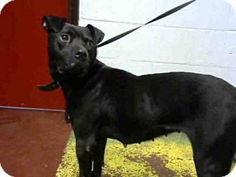 Pit Bull Terrier Dog for adoption in Atlanta, Georgia - EDEN