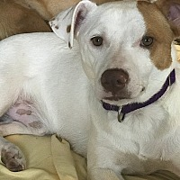 Adopt A Pet :: Simon - Columbia, TN