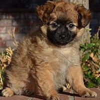 Adopt A Pet :: Faline - Simi Valley, CA
