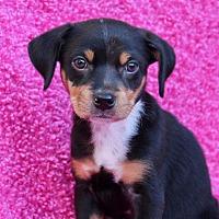 Adopt A Pet :: McKenzie - Los Angeles, CA