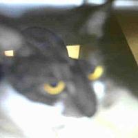 Adopt A Pet :: A019075 - Tavares, FL