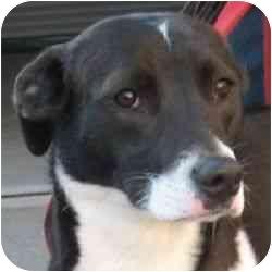 Border Collie/Whippet Mix Dog for adoption in Berkeley, California - Jenna