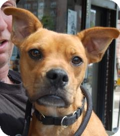 Boxer Mix Dog for adoption in Brooklyn, New York - Peaches