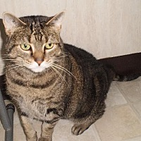 Adopt A Pet :: Tabitha - Berkeley Springs, WV