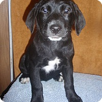 Adopt A Pet :: Lissa - Gregory, SD