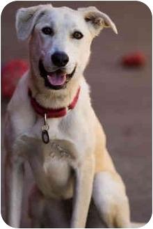 Labrador Retriever Mix Dog for adoption in Portland, Oregon - Ella