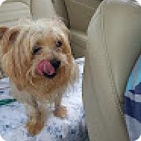 Adopt A Pet :: Sam - Delaware, OH
