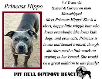 American Staffordshire Terrier Mix Dog for adoption in Lafayette, Oregon - Princess Hippo