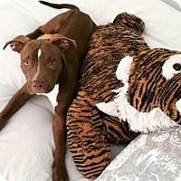 Adopt A Pet :: Sunny (Courtesy Posting) - Scottsdale, AZ