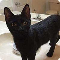 Adopt A Pet :: Starscape - Herndon, VA