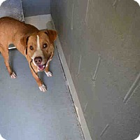 Adopt A Pet :: Buster - Newnan City, GA