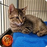 Adopt A Pet :: HARRIET - Kyle, TX