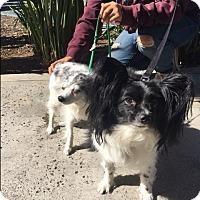 Adopt A Pet :: Joey - Santee, CA