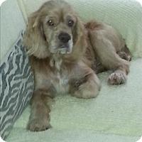 Adopt A Pet :: Trooper - Dothan, AL