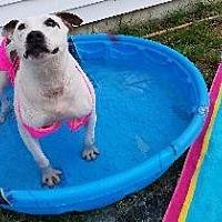 Adopt A Pet :: Myrna - Queenstown, MD