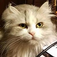 Adopt A Pet :: Arrow - Ennis, TX