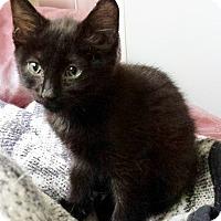 Adopt A Pet :: Tippecanoe - Chelsea - Kalamazoo, MI