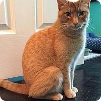 Adopt A Pet :: Willow 2 - Hamilton, ON