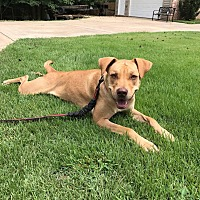 Adopt A Pet :: Sasha~adopted! - Southbury, CT