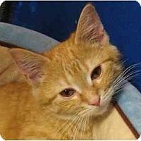 Adopt A Pet :: Maddie - Jenkintown, PA