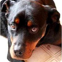 Adopt A Pet :: FIONA - Wakefield, RI
