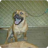 Adopt A Pet :: Thelma - Carencro, LA