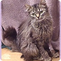Adopt A Pet :: Maybelline - Brookville, IN