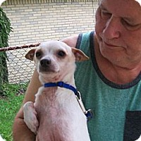 Adopt A Pet :: C.J - West Bloomfield, MI