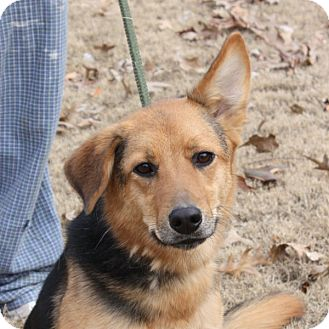 Shepherd (Unknown Type) Mix Dog for adoption in Marion, Arkansas - Addy