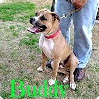 Adopt A Pet :: Buddy (Courtesy Post) - Scottsdale, AZ
